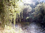 river_4