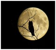 luna y buho