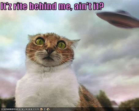 funny-pictures-cat-sees-ufo