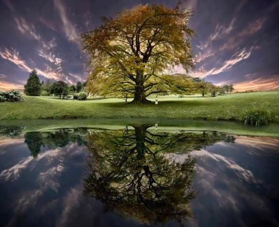 ONE 2 tree