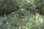 SMJ Trackbed Bidford 22 June 2014 001a
