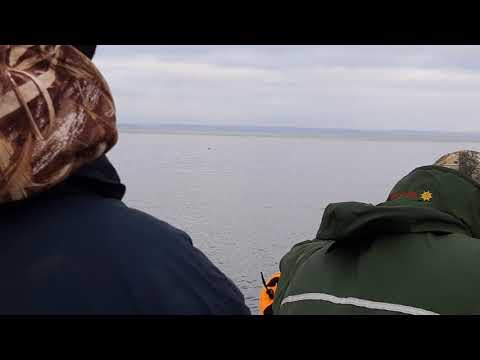 Seal hunting in CBS