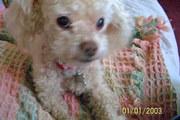 Bare ~ passed 3/08 ~ age 13