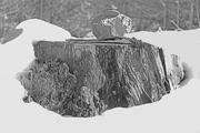 stump in snowbank