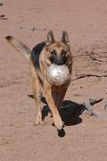 Mojo playing soccer