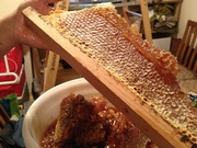 Honey harvest 2014