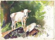 cute calf seen at Karadimalai,  ref. from my photograph