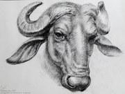 Buffalo head - master work study