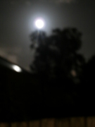 Out of focus by moonlight