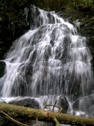Falls on the Menzies Trail