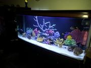 First picture setting the aquarium