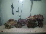 45g reef