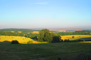 Evening in Stanmer Park