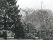 First Snow Fall In TR.  December 2014