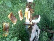 Bear damage 2012