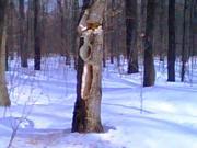 Woods 2009B