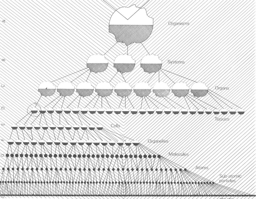 Arthur Koestler: Holons / Hierarchy 1200px