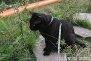 Kočka na zahradě, teda na stavbě.