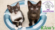 Second Chance Animal Shelter Pet Adoptions