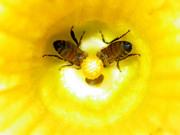 Beekeeping Educators