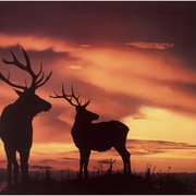 Elk Hunters Group