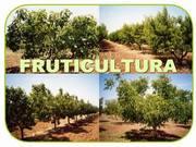 Horticultura (Olericultura, Fruticultura e Hortaliças)