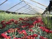 Floricultura e Paisagismo