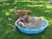 Ashley in pool with Chevy and Odie