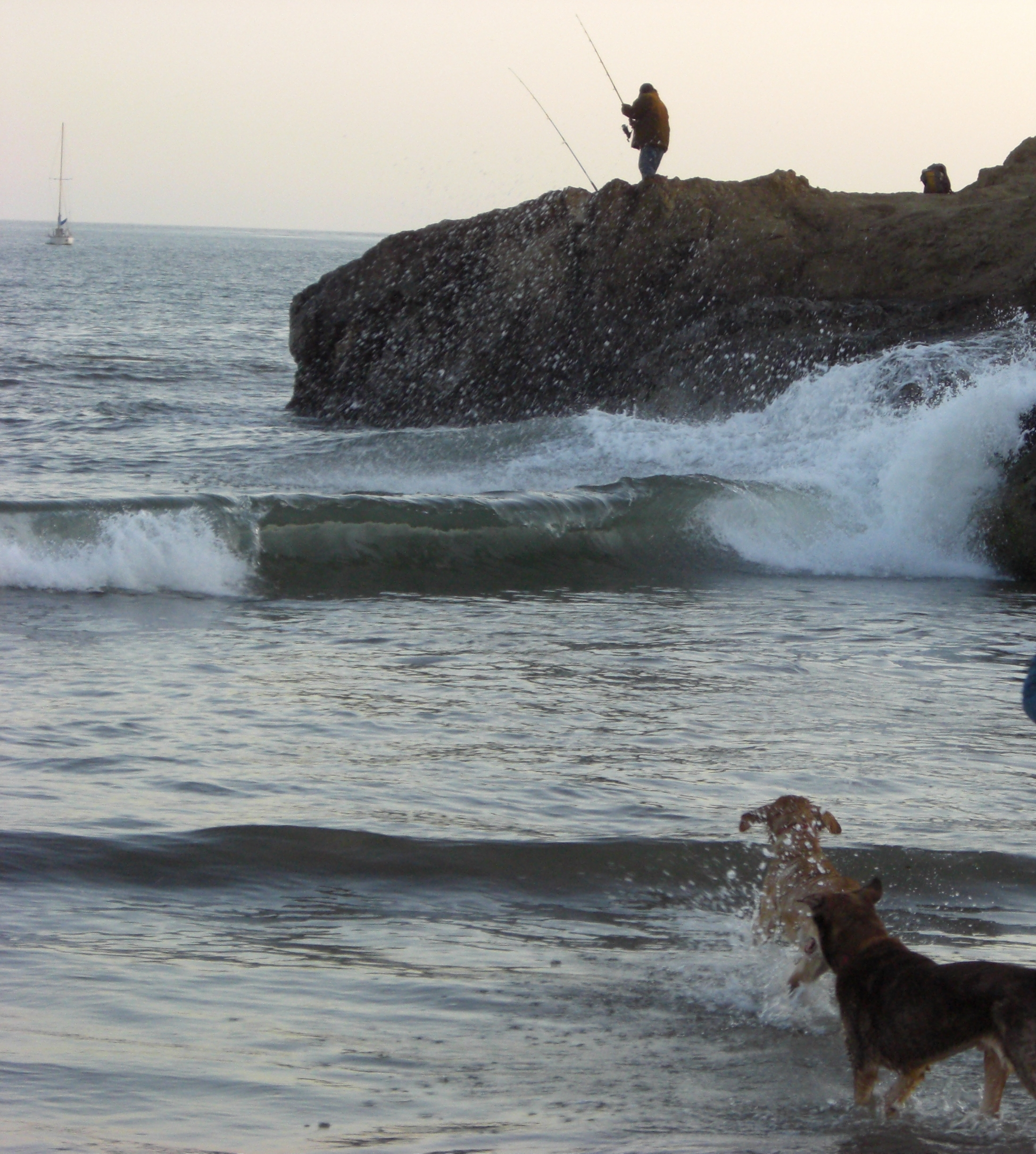Big waves, small dogs