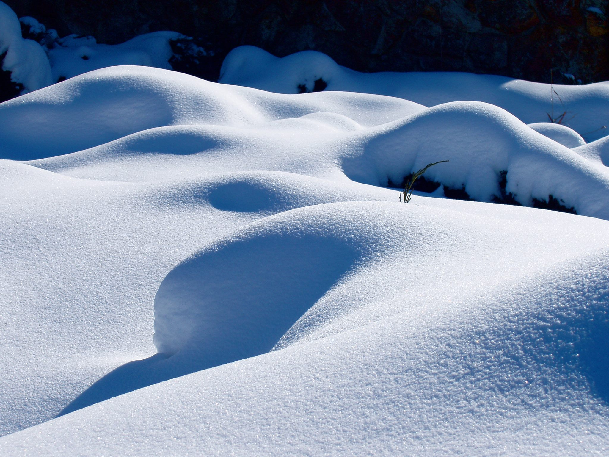 senuous snow