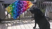 Rainbow Riot
