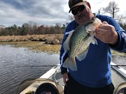 Crappie Pushing Shallow On The Albemarle......3/16/2019