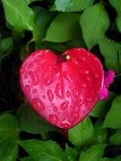 Maui Hana Heart Flower 07