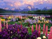 mountains &flowers