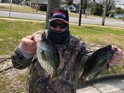 Black Crappie Daily Double.......Male and Female