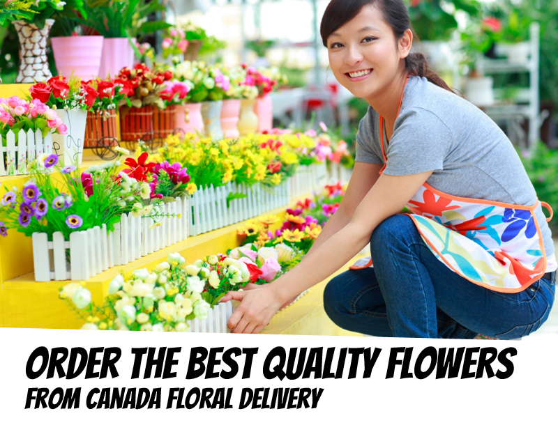Order the Best Quality Flowers from Canada Floral Delivery