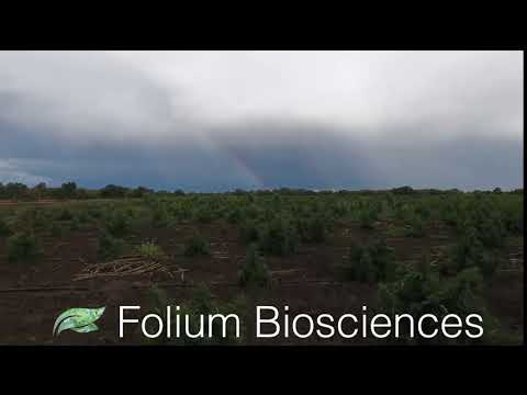 Our Advantage | Folium Biosciences