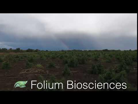Our Advantage | Folium Biosciences