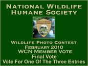3 Way Final Vote Feb 2010 Photo Contest