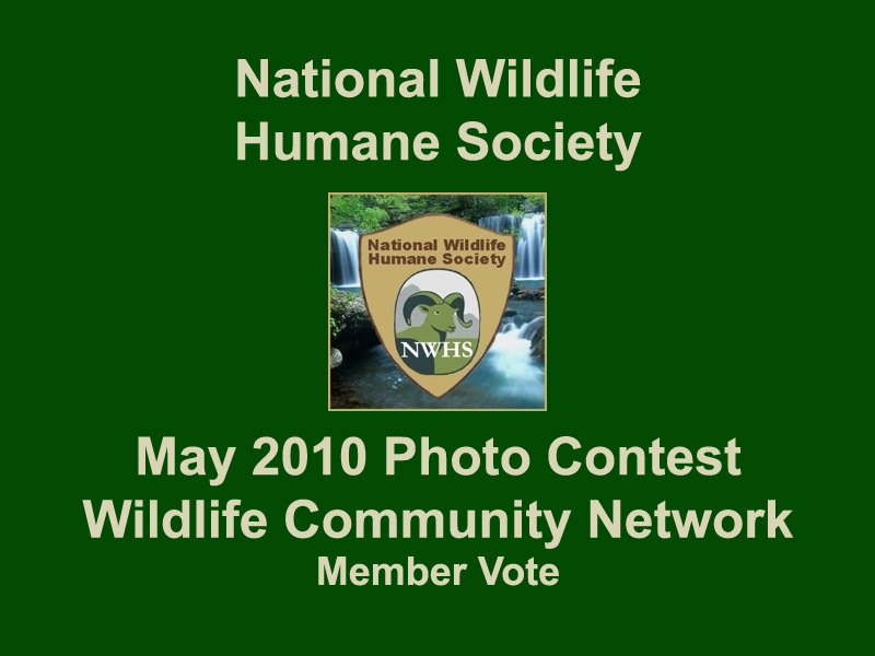 NWHS Photo Contest May 2010 Finalists