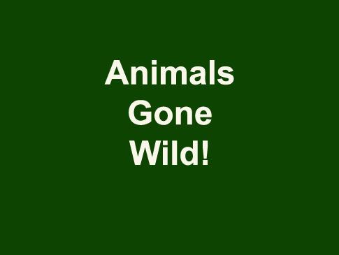Animals Gone Wild!