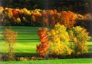 MargaretaThaute_AutumnBeauty