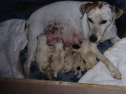 Penny and her six babies