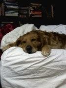 bella on bed (3)