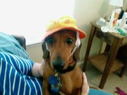winston's hat