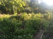 *Planning Your Spring Garden