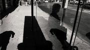 bustopglassshde