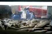pescados y Vespa