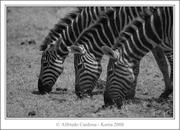 Kenia 2008 Animales