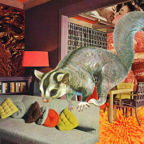 sugar glider roomscape collage